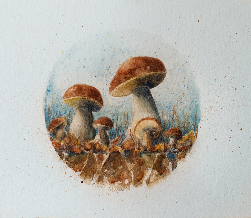 Claire Gunn Mushrooms 2017